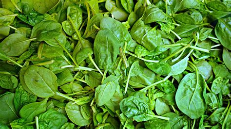 come si cucinano gli spinaci freschi spincaci come si cucinano ricette propriet 224 e