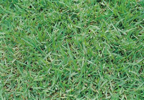Grass Seeds by Top 28 Grass Seed Lawn Grass Seed And Grass Seeding