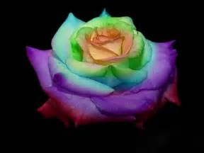 rainbow colored roses rainbow by godgun on deviantart
