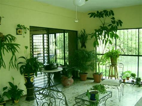 Plants For Living Room India Indoor Plants That Clean The Air Www Coolgarden Me