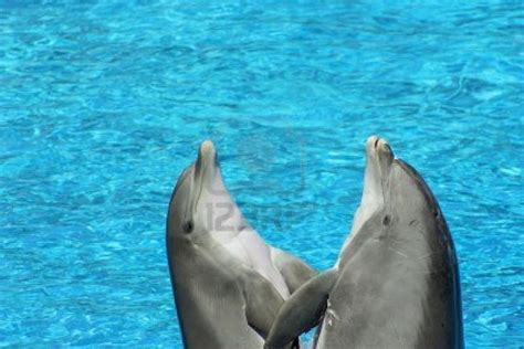 google images dolphins pictures of dolphins google search dolphin love
