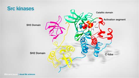 protein kinase is an enzyme that related keywords suggestions for src kinase