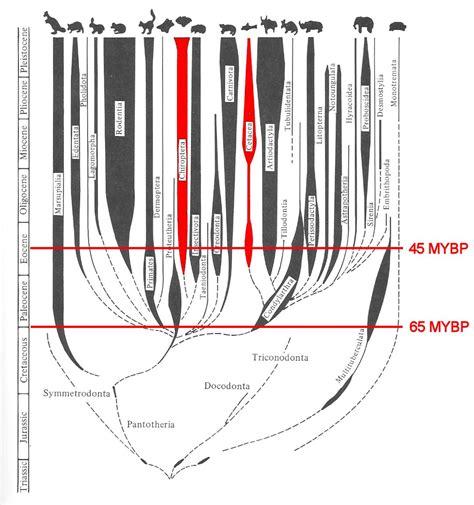 adaptive radiation diagram mammalian adaptive radiation