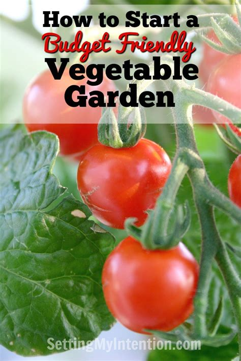 how to start a small vegetable garden in your backyard do it yourself how to start a budget friendly vegetable