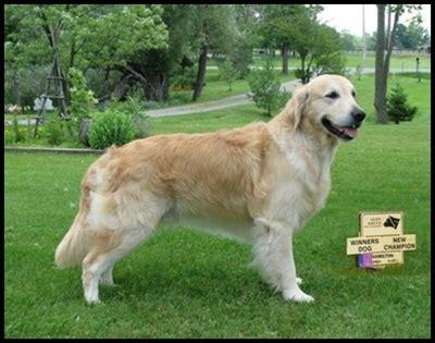 golden retriever club of canada george braefield reg d