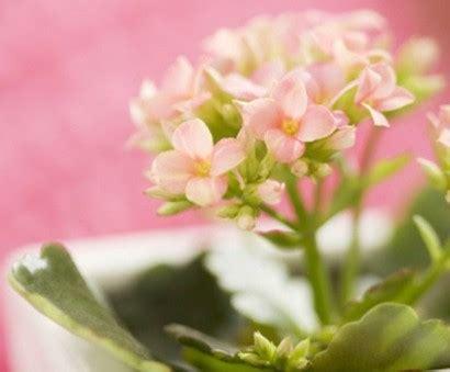 Garten Pflanzen Die Wenig Licht Brauchen by Zimmerpflanzen Die Wenig Licht Brauchen