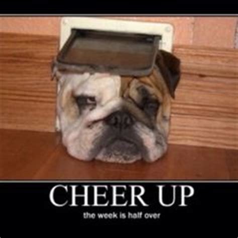 cheer up puppy 1000 images about cheer up on cheer up cheer up quotes and cheer