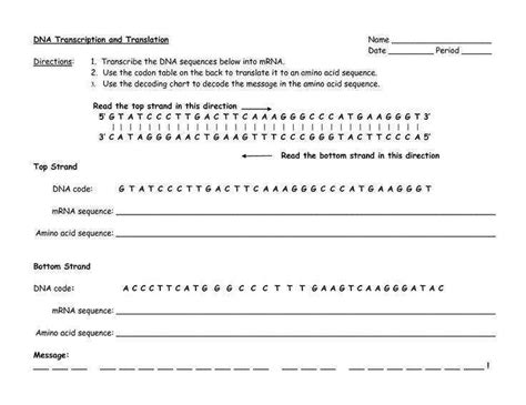 dna coloring transcription and translation transcription and translation worksheet