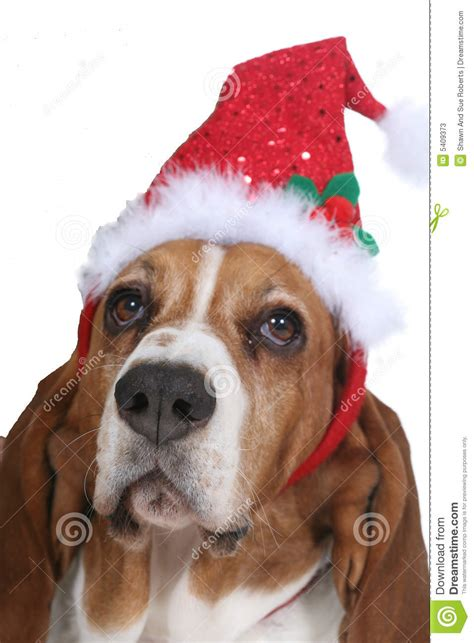 Dog Ornaments For Christmas Tree - basset hound wearing a santa hat stock photos image 5409373