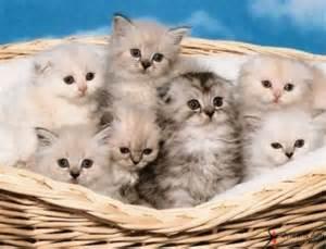 le chat 224 l honneur ce week end au parc des expositions d