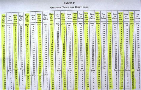 gestation period calculator cattle gestation period table periodic diagrams science