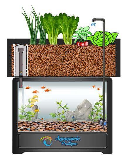 Que Faut Il Pour Un Aquarium by Votre Premier Syst 232 Me D Aquarium En Aquaponie L