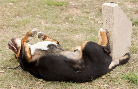 itchy skin on dogs best skin remedy to treat your s skin at home times guide to dogs