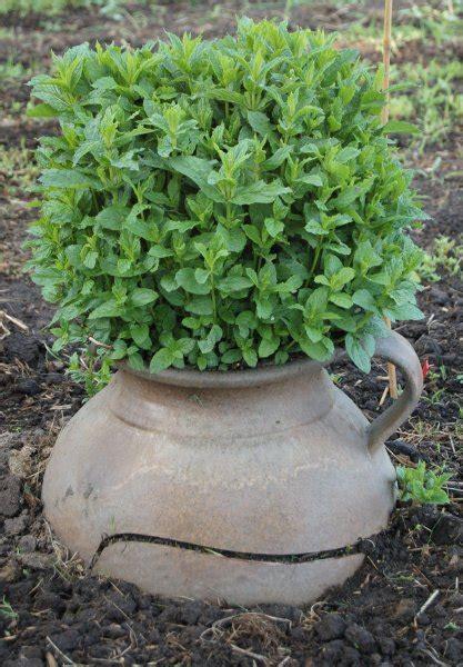 Riesige Pilze Im Garten by Teekr 228 Uter F 252 R Kr 228 Utertee 171 Wir Sind Im Garten