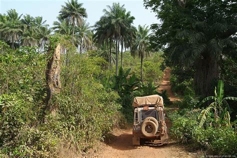 land rover jungle african jungle animals border land rover jungle