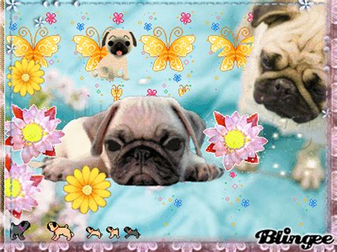 pug ecards pug magical picture 131124149 blingee