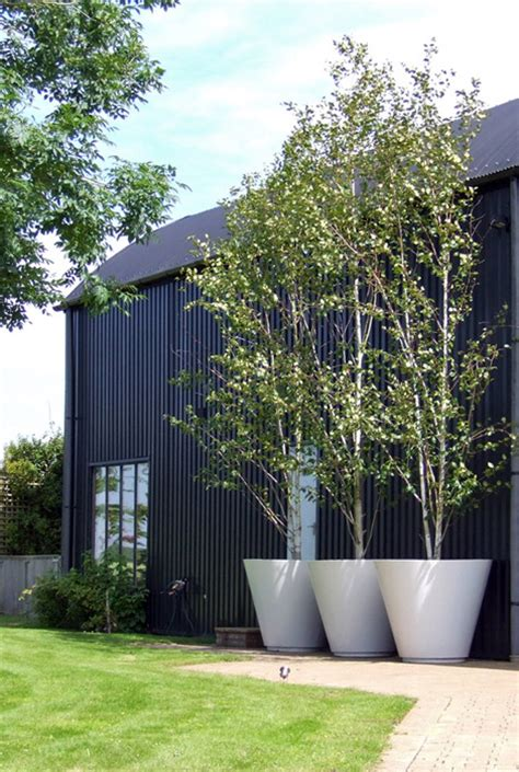 big impact with oversize white planters for trees country