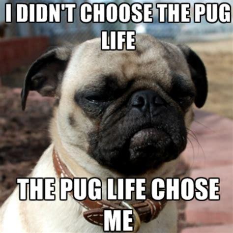 Pug Life Meme - pug life meme memes