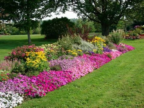 plantas para jardines tipos de plantas para jardines