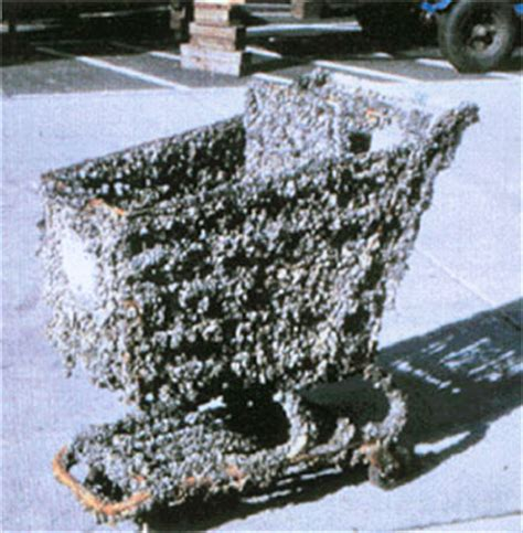 how to remove zebra mussels from a boat full spectrum biology the zebra mussel invasion of the