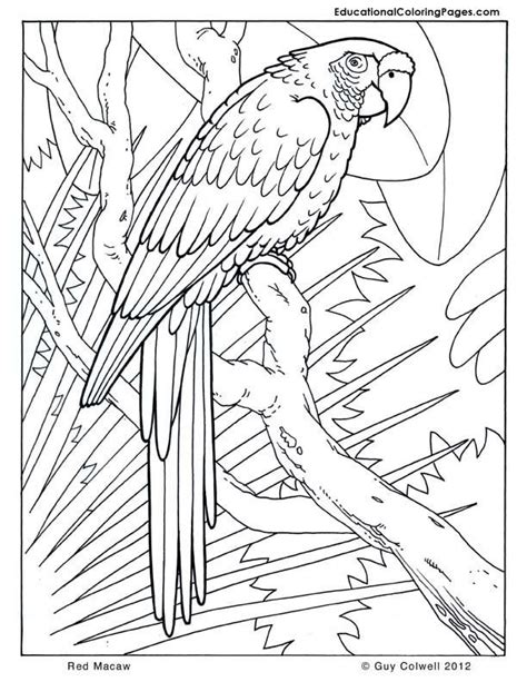 coloring pages of birds in the rainforest coloring pages parrots coloring home