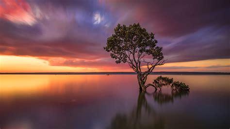 wallpaper victoria australia lake tree sunset glow