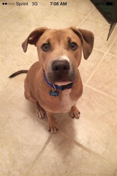 puppy adoption miami pet adoption stories humane society of greater miami autos post