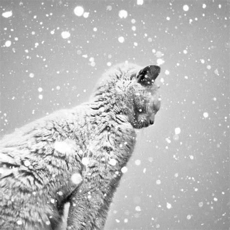 imagenes te blanco 20 fotograf 237 as en blanco y negro que te dejar 225 n sin aliento
