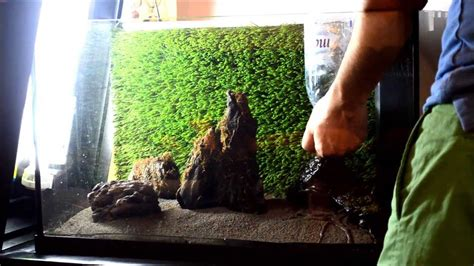 How To Set Up An Aquascape by 10 Steps Aquascape Aquarium Set Up Build 3