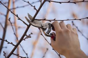 j parkers fruit trees how and when to prune j parkers