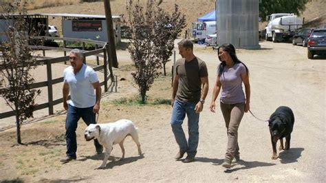 whisperer rottweiler episode 22 best cesar millan tv images on