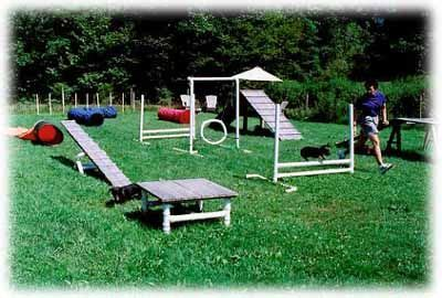 Backyard Agility Course by 25 Best Ideas About Agility On