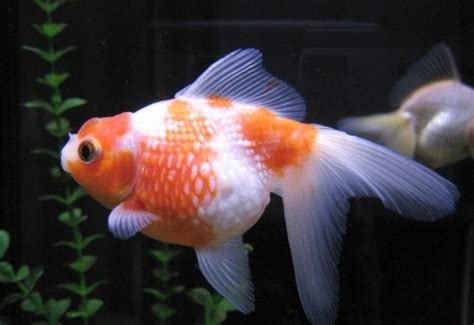 imagenes animales con escamas peces vertebrados