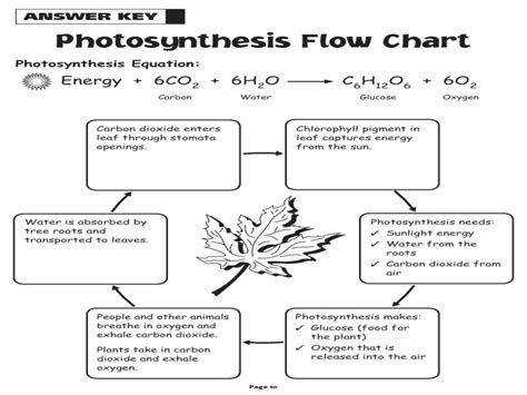 photosynthesis flowchart photosynthesis flow chart worksheet pictures