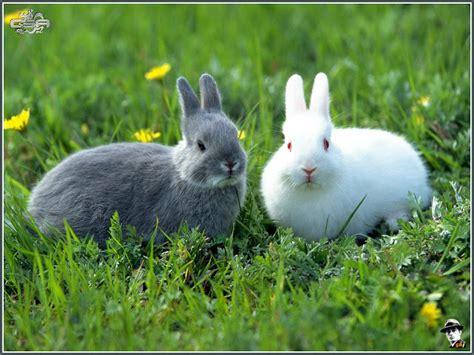 Kelinci Imut Lucu 10 wallpaper kelinci gambar kelinci yang imut dan lucu