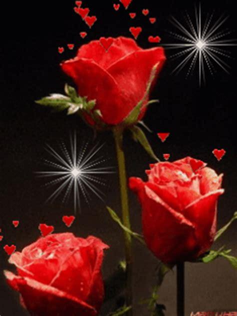 imagenes de flores en movimiento hermosas imagenes de flores rosas rojas con movimiento