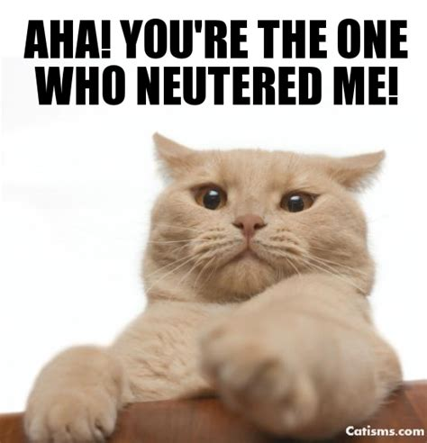 when to get neutered pin neutered image search results on