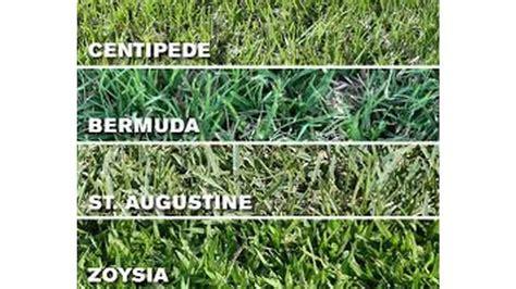 zoysia vs bermuda centipede carpetgr seed mix carpet vidalondon