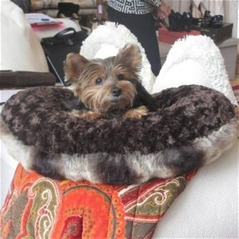 yorkie beds small beds puppy hugger