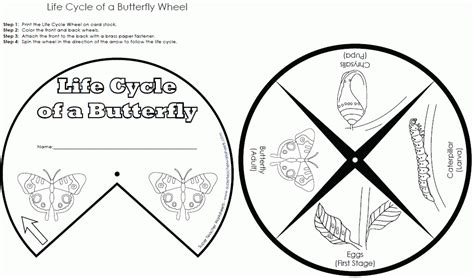 coloring pages butterfly life cycle butterfly life cycle coloring page coloring home