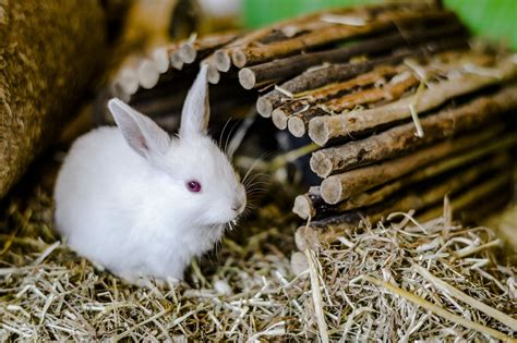 Gift Ideas Women by Rabbit Weneedfun