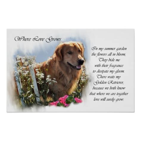 golden retriever poster golden retriever line mini poster print breeds picture