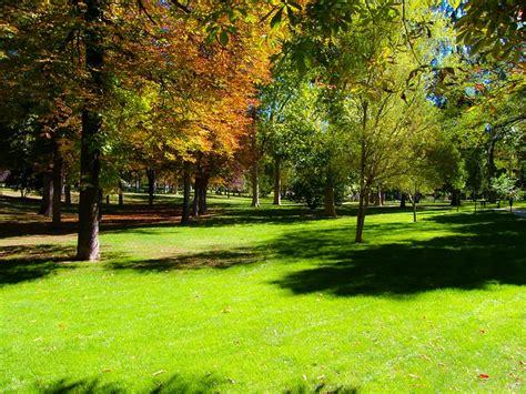 arri鑽e plan bureau hd photo gratuite parc for 234 t arbre nature paysage