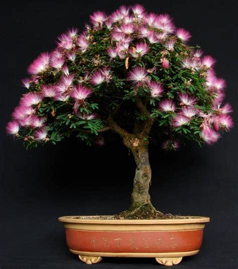 Bonsai Pink 193 best images about bonsai on