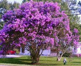 summer flowering trees collection on ebay
