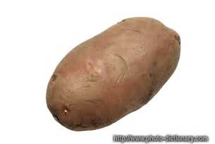 potato photo picture definition at photo dictionary