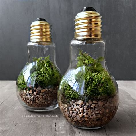 Light Bulb Planter by Light Bulb Plant Terraium For Industrial Decorating