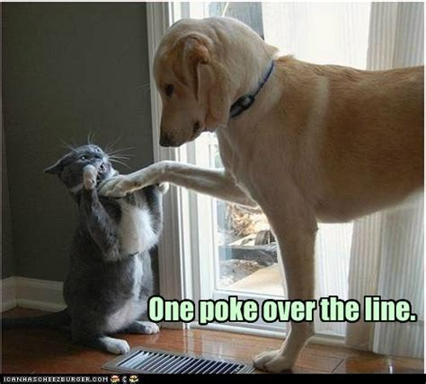 Dog And Cat Memes - why does the internet love cats pcworld