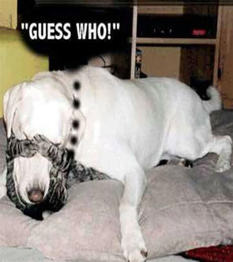 funny cat  dog pics  captions entertainmentmesh
