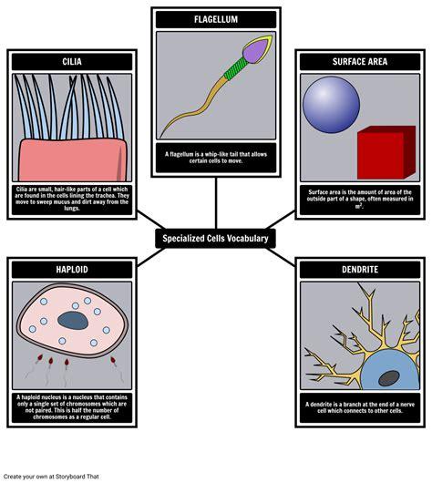 what are stem cells lauraandwagner com